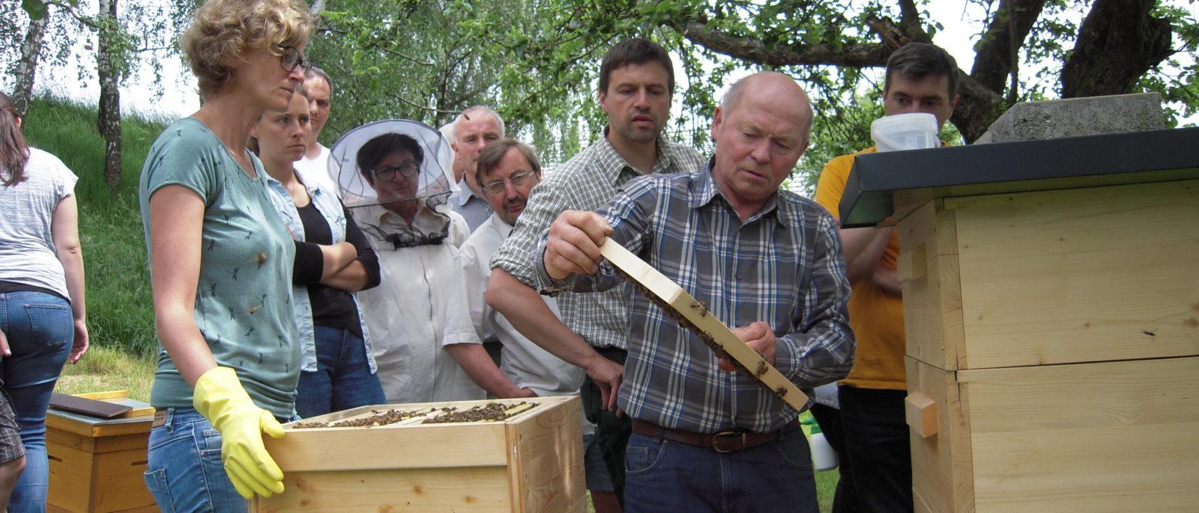 Ein Bienenjahr
